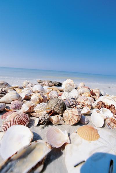 Sanibel Island Fla Sand Shells